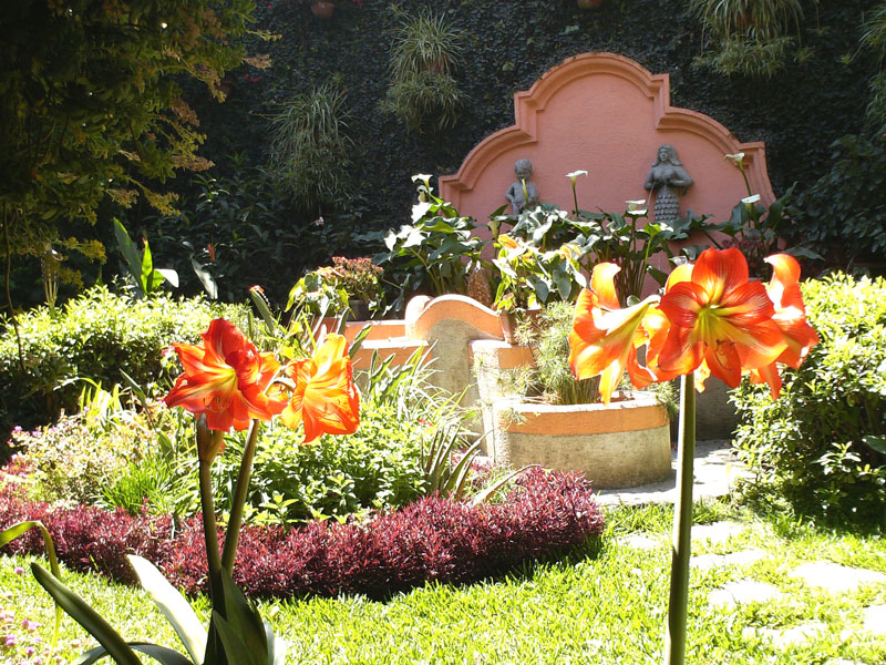 March in Antigua ... our garden is blooming ... Felix takes good care of it, and he is growing lots of new amaryllis plants